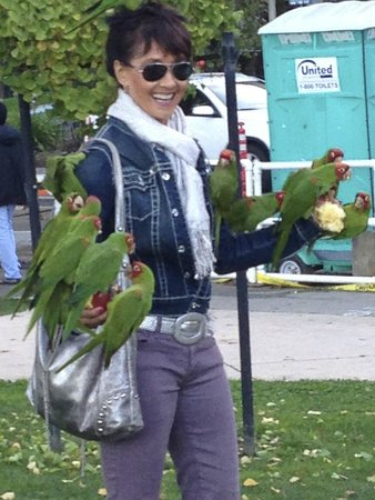 North Beach: The famous Wild Parrots of Telegraph Hill
