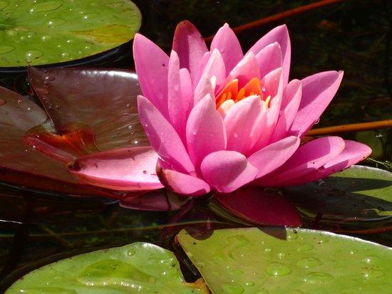 Petersen Rock Garden and Museum: lily
