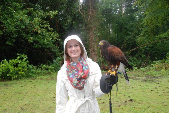 Ireland's School of Falconry: Harley during our Hawk Walk