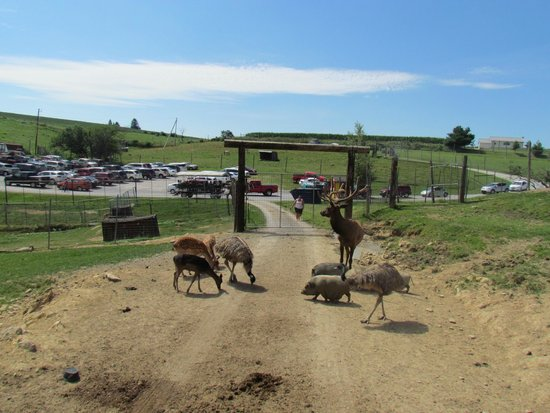Rolling Ridge Ranch: Just inside the wagon ride park