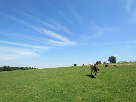 Rolling Ridge Ranch: Beautiful grounds