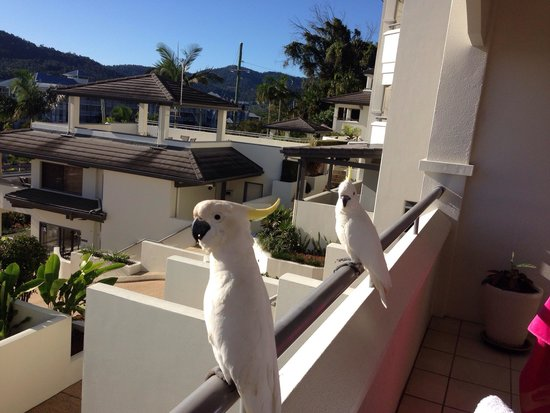 Portside Whitsunday: Local wildlife popped in say morning!