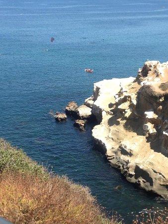 La Jolla Cove: seals