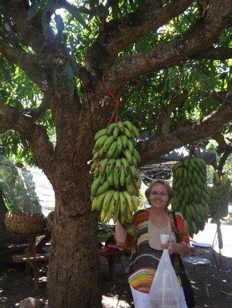 Tropical Farms Macadamia Nut Farm and Farm Tour: What a lovely bunch!