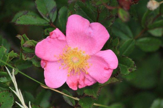Mount Desert Island: Flowers everywhere