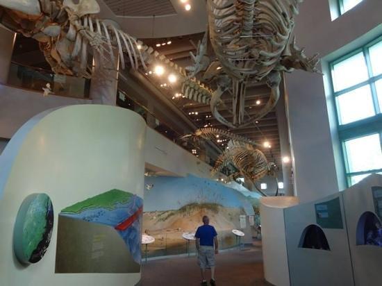 North Carolina Museum of Natural Sciences: Large marine display