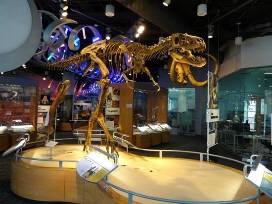 North Carolina Museum of Natural Sciences: Just one of the dinos!