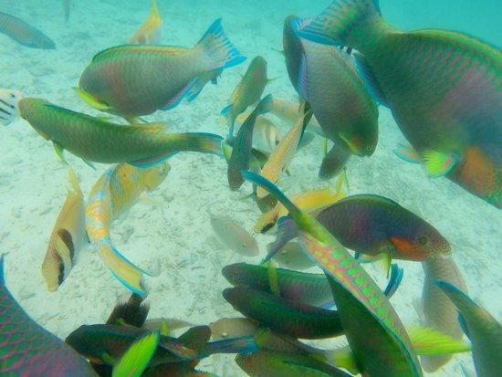 Koh Nang Yuan: Brilliant for snorkelling