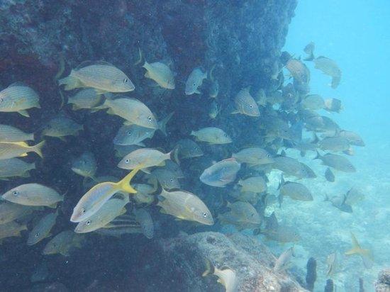Aqua Mania Adventures: Creole Rock Marine Park