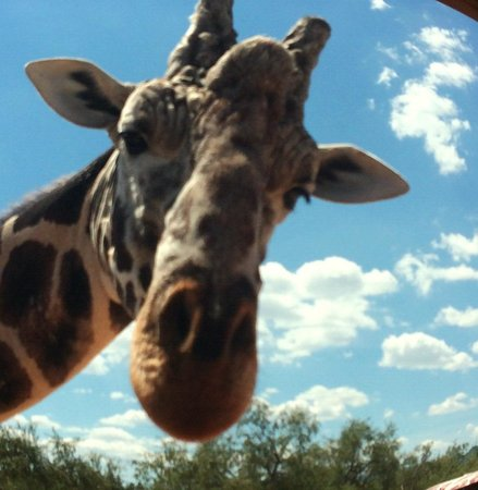 Out of Africa Wildlife Park: Up close and personal