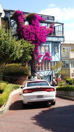 Lombard Street: 手入れされた花壇