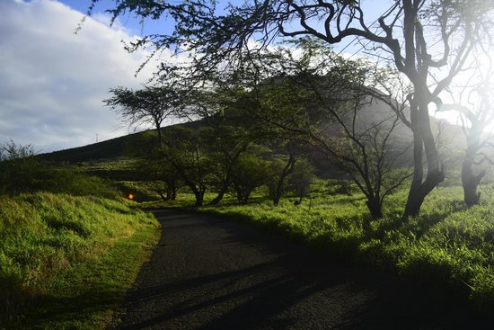 Koko Crater Trail: go before sunrise, it's about 7 am on this photo and it's already pretty hot