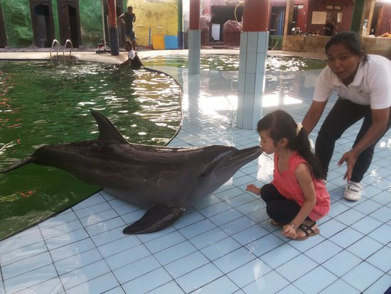 Melka Excelsior Resort Hotel : kiss the dolphin