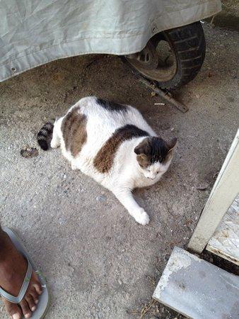 Maltepe Pension: Fattest cat in Turkey lives here