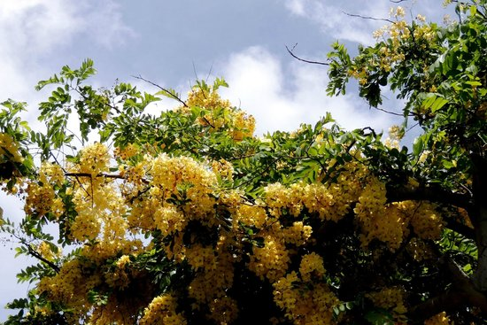Maui Nui Golf Club : flowers were blooming everywhere