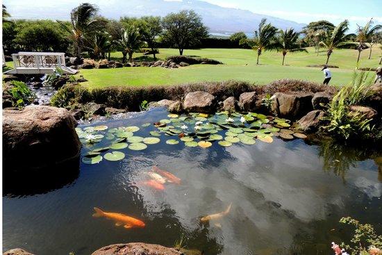 Kahili Golf Course: Koi pond