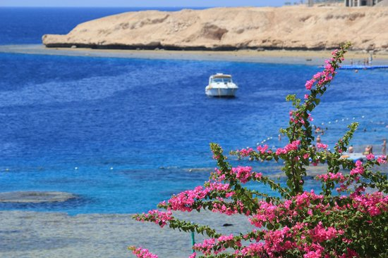 Hilton Sharks Bay Resort: Пляж