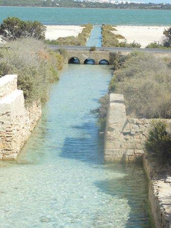 Hostal La Savina : Canal