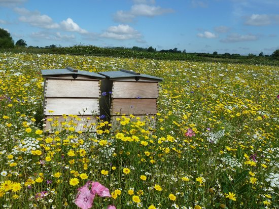 Field of Dreams: beehives
