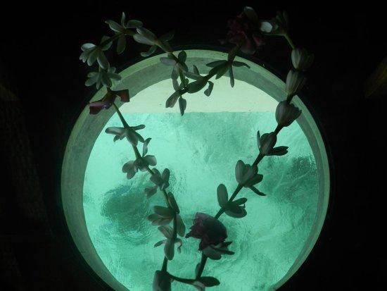 Sofitel Bora Bora Marara Beach Resort : du salon