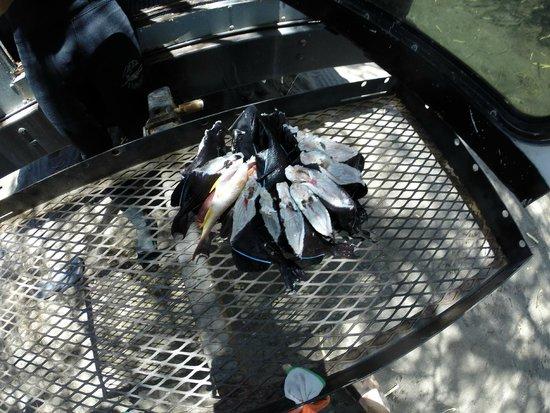 Top Shot Spearfishing: Soon to be sashimi!