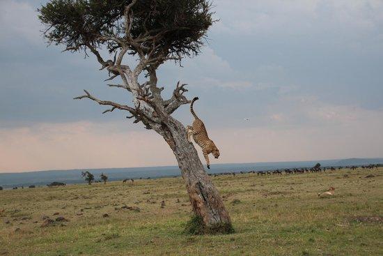 Elephant Pepper Camp : Cheetah
