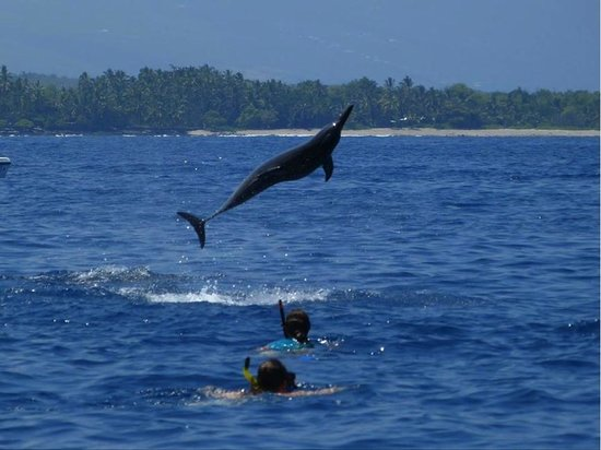 Splasher's Ocean Adventures: The dolphins were happy to show off!