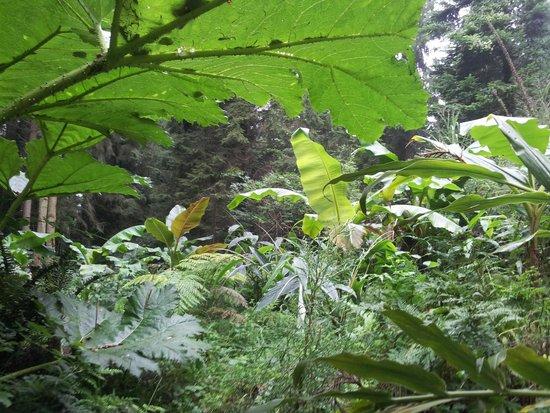 Jardin Jungle Karlostachys