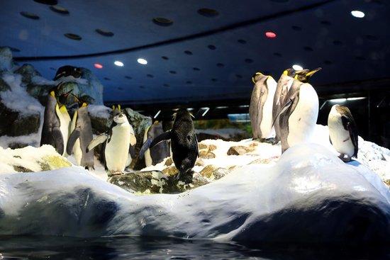 Loro Parque: pinguini