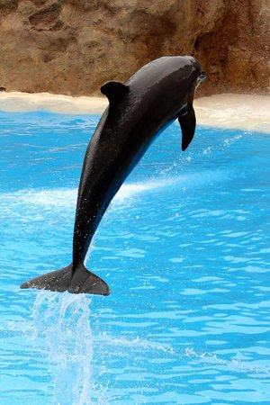 Loro Parque: delfini