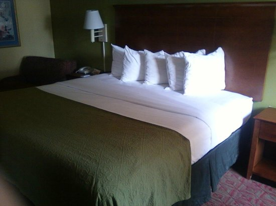 Quality Inn: nice bedding on the KIng size bed.