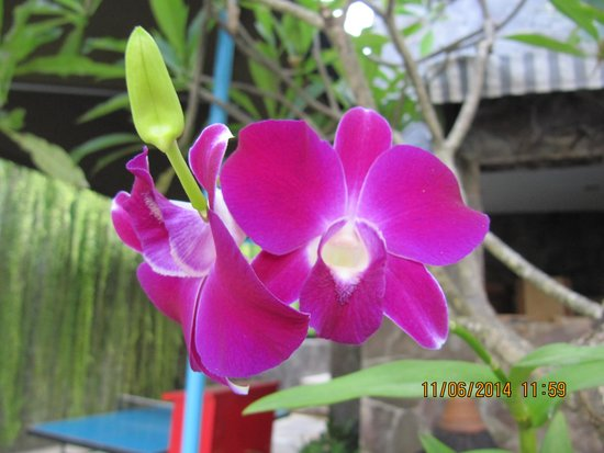 Kuta Paradiso Hotel: Beautiful orchid near pool