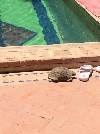 Les Jardins d'Henia: La tortue du Riad