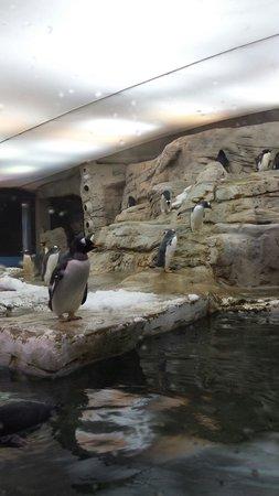 Selwo Marina : Pingüinos