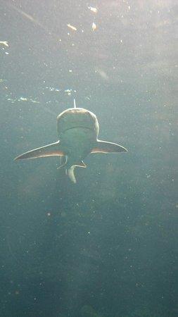 Nausicaa, Centre National de la Mer : Requin