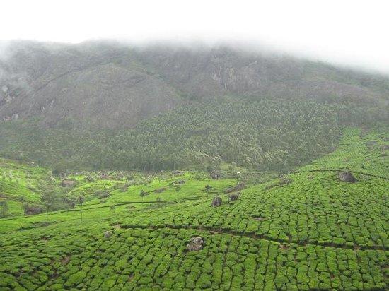 Kannan Devan Tea Museum: hills