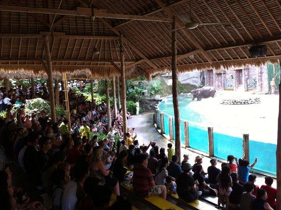 Mara River Safari Lodge: Elephant show