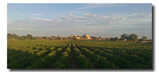 Baglio Oneto Resort and Wines: Los viñedos.