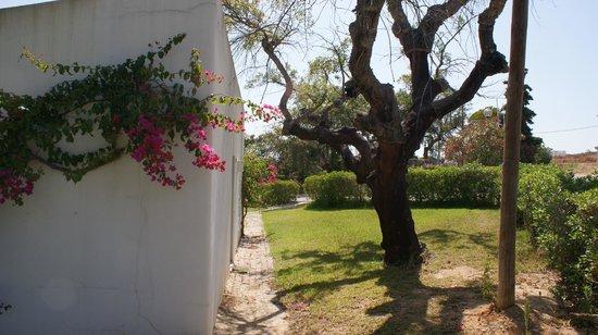 Quinta da Balaia: Zijaanzicht van de besloten achterkant van bunalow