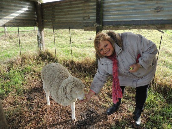 Ibis Place Country House & Cottages: Feeding Lamb Chop