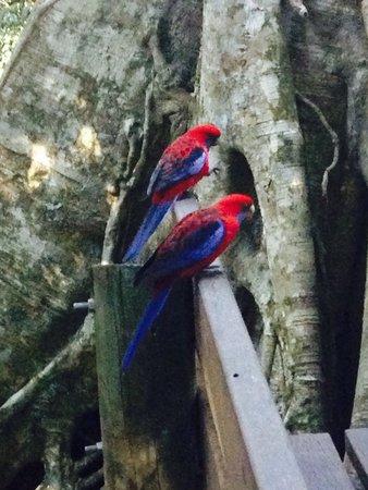 JPT Tour Group: A pair of beautiful wild birds.