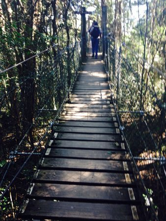 JPT Tour Group: Part of the suspended walk through the forest canopy at O'Rileys