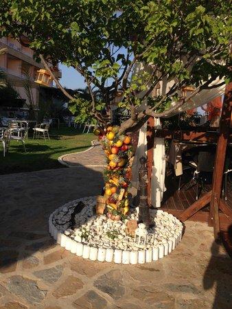 Hotel La Cumbre: Nice tree!