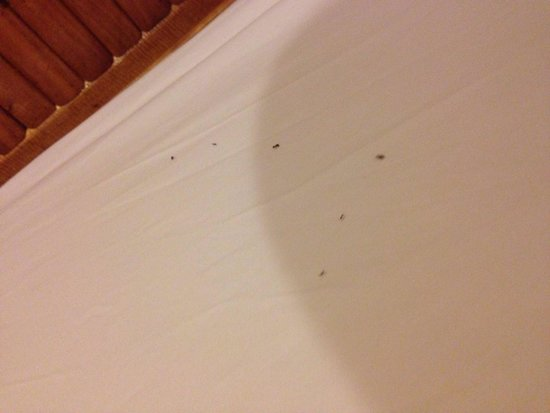 Kantiang Bay View Resort: Ant infested bed