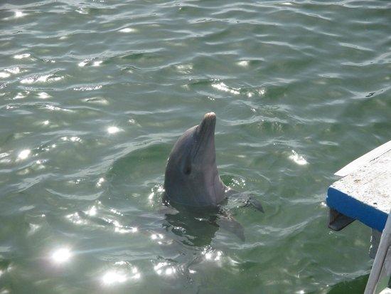 Memories Varadero Beach Resort: Les dauphins!