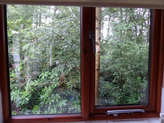 Darwin Forest Country Park: View from kitchen window !