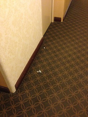 New York Hilton Midtown: Trash on floor in hallway for several days - same trash!