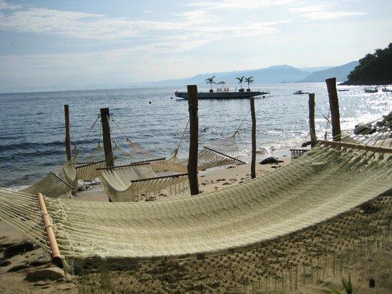 Vallarta Adventures - Las Caletas Beach Hideaway : Chillin place