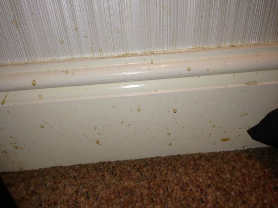 The Howbeck : Stained skirting