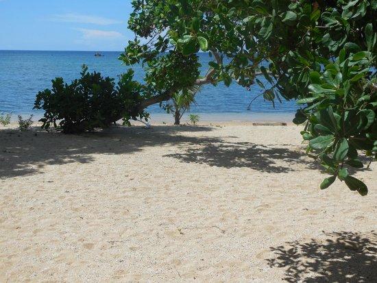 Cashew Grove Beach Resort : Beach
